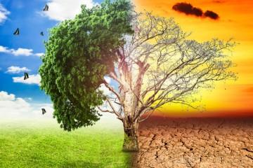 RECICLAREA - una dintre soluțiile pentru combaterea încălzirii globale